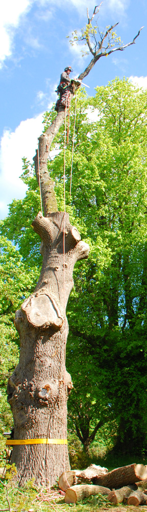 Sectional felling, tree surgery